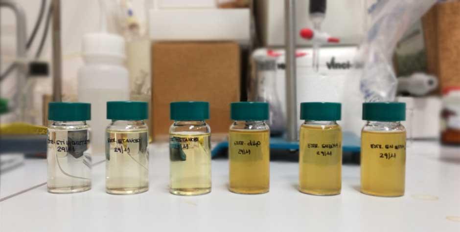 laboratorio jatropha